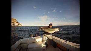 San Carlos Mx Yellowtail Fishing And Spearfishing