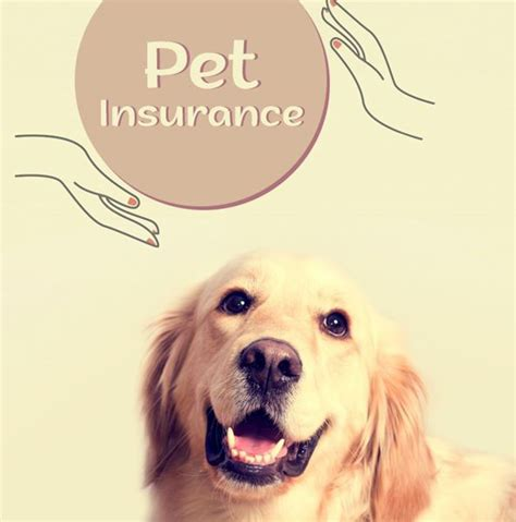 How much you pay for pet insurance varies greatly. How to Find Best Pet Insurance For your Pet and What Should You Know Before Buying? | The Good ...