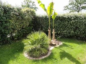 Palmier De Jardin : petit jardin avec palmier aquarelle online ~ Nature-et-papiers.com Idées de Décoration