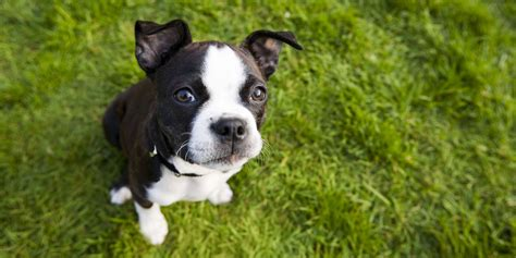 35 Best Small Dog Breeds  List Of Top Small Dogs With. Valances For Living Room Windows. Entertainment Centers Living Room. Living Room Furniture Sets For Cheap. Pictures Of Laminate Flooring In Living Rooms. Ideas For Large Living Rooms. Living Room Window Treatment. Living Room Area Rugs. Paint Colors For Living Rooms