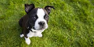 35 Best Small Dog Breeds - List of Top Small Dogs with ...