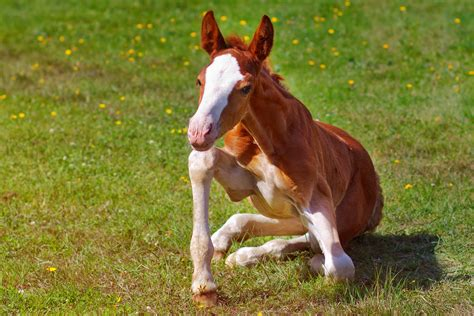 horse osteoarthritis horses treatment symptoms recovery diagnosis causes