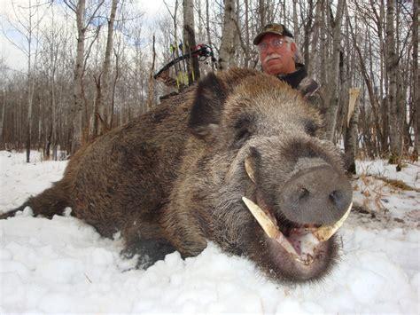 Russian Boar & Razorback Hog