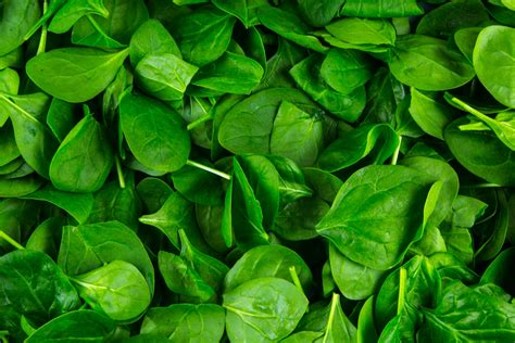 Pictures Images Spinach Leaves Free Stock Photo Domain Pictures