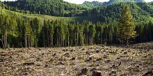 deforestation - definition - What is