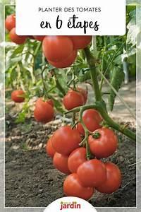 Comment Tuteurer Les Tomates : comment planter les tomates en 6 tapes tomates ~ Melissatoandfro.com Idées de Décoration