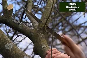 Winter Prune Apple Trees  Video