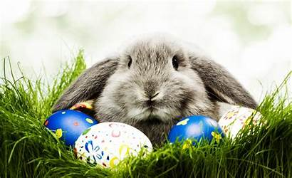 Funny Wallpapers Computer Desktop Backgrounds Easter Bunny