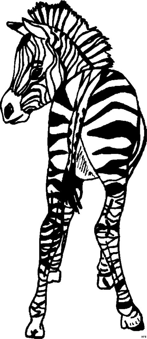 baby zebra ausmalbild malvorlage tiere