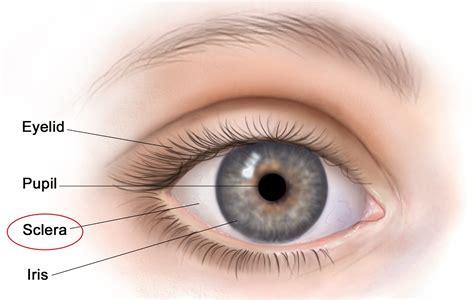 Ubayd Blog The Mammalian Eye 1