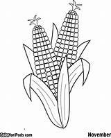 Corn Coloring Pages Drawing Ears Ear Cob Printable Colouring Squash Sisters Three Template Beans Preschool Sheet Aboriginal Sheets Milho Para sketch template
