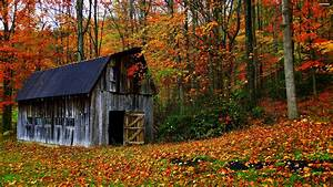 House, Autumn, Leaves, Trees, Jungle, Forest, Countryside, Huts, Landscapes, Nature, Earth