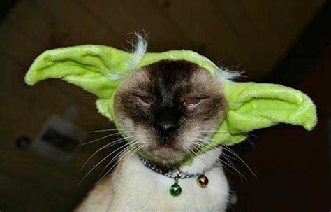 star wars cats gallery worldwideinterweb