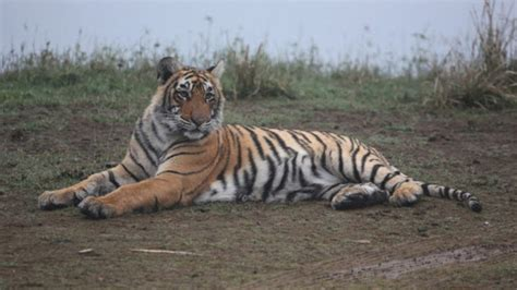 ranthambore park national tiger safari detailed travel guide reserve lovers timings ticket booking attractions zone prices know