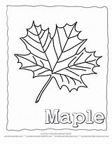 Maple Leaf Coloring Pages Leaves Template Syrup Printable Outline Tree Printables Blank Wonderweirded Wildlife Colouring Collecting Drawing Autumn Identification Clrg sketch template