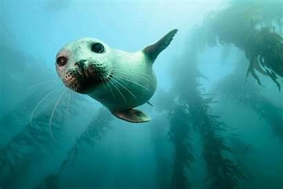 Ocean Conservation Marine Save Wildlife Help Poster