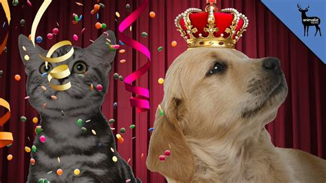 than cats better dogs why facts cat dog reasons owners manhattanville happier finds study college
