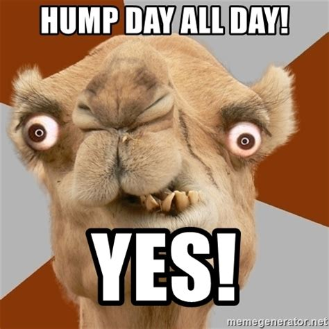 Hump Day Meme Funny - the gallery for gt geico camel meme drunk