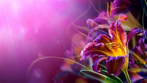 Hd Bakgrundsbilder Blommor