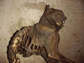 mummy cat mummy cat echunks