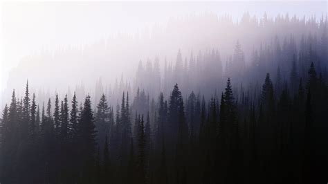 4k Harry Potter Wallpaper Forest Trees Nature Mist Wallpapers Hd Desktop And Mobile Backgrounds