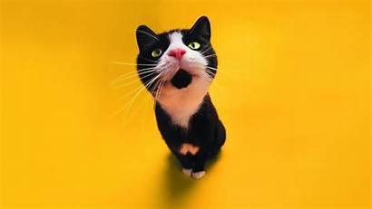 Funny Wallpapers Cat Pixelstalk