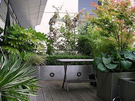 arbusti da terrazzo v di vaso come coltivare gli arbusti ornamentali