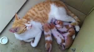 feeding cats cat breast feeding kittens