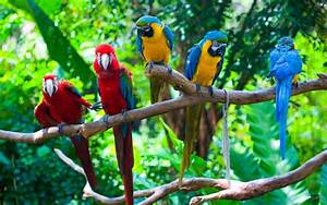 Colorful, Parrots, On, Branch, Background, Position, Of, Egotism