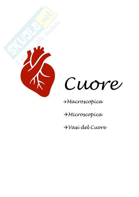 cuore e vasi cuore macroscopica microscopica vasi
