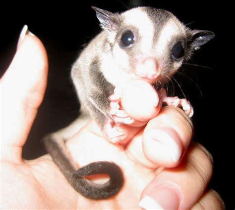 hewan kecil  unik  lucu blog azis grafis