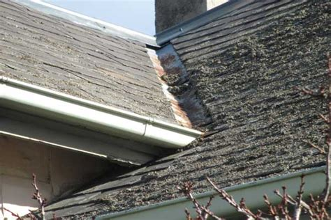 Property Cleaning & Maintenance Anderson Roof Window Flashing Kit Taxi Signs Northern Ireland Gutter Cleaning Service Shed Metal Building 1 Stainless Steel Roofing Nails Flat Repair Pittsburgh Sealing Rv Seams How To Leaky Shingles