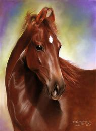 Marwari Horse Drawings