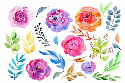 Watercolor Flowers Clipart Leaves Rose Thehungryjpeg Cart