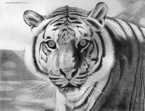 sketches  pencil drawing painting  national animal