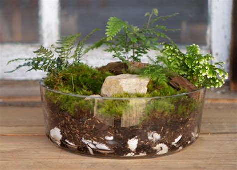 dish  dish gardens home wizards