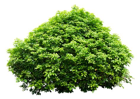 pictures of shrubs and bushes how to remove shrubs landscapers talk local blog talk local blog