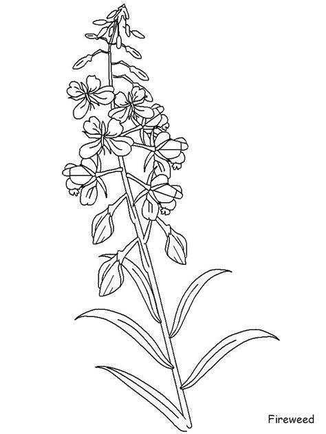 fireweed | Ink | Pinterest | Tattoo and Tatting