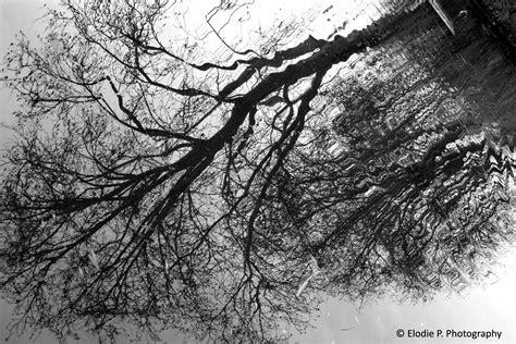 Tree Reflection Réflection Dun Arbre Elodie P