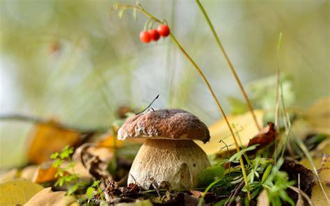 Обои грибы в лесу картинки на рабочий стол скачать