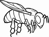 Bee Coloring Honey Pages Drawing Line European Bees Bumblebee Bumble Hive Beehive Drawings Outline Print Flying Cartoon Printable Cute Getdrawings sketch template