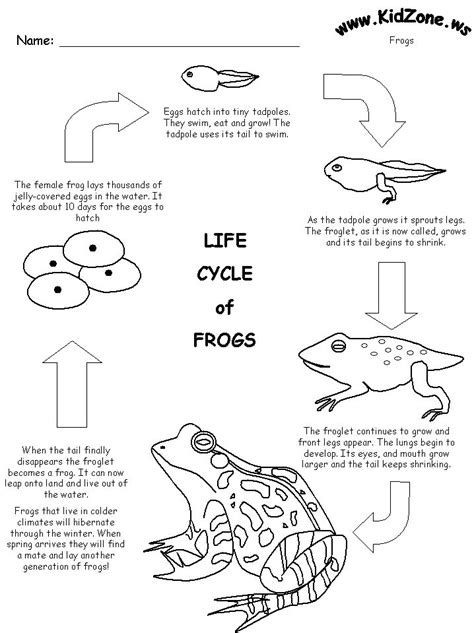 Life Cycle Worksheet  Plantsunit Pinterest