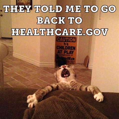 funny cat memes  life   modern world cattime