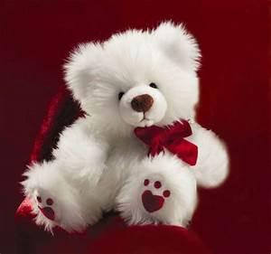 Photo Gallery | Free Premium Wallpapers |: Sweet Teddy ...