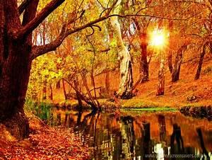 Schöne Herbstbilder Kostenlos : herbst screensaver pack download chip ~ A.2002-acura-tl-radio.info Haus und Dekorationen