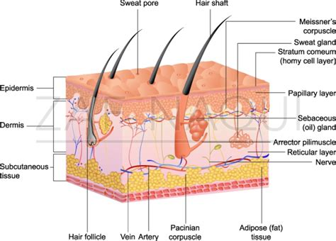 Skin Infections (part 1)