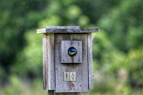 mailbox bird house project