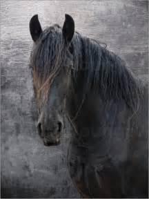 Joachim G Pinkawa Friesen Pferd Poster online bestellen