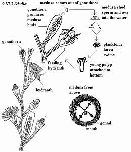 Labeled Jellyfish Diagram