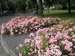 Wann Kletterrosen Schneiden : rosen zur ckschneiden granitplatte terrasse ~ Watch28wear.com Haus und Dekorationen